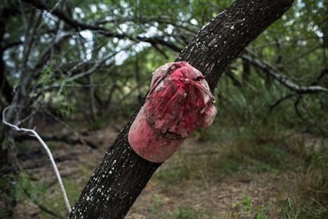 Border crisis: Texas ranchers struggle to balance compassion and