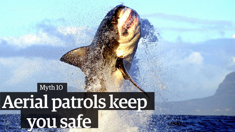 Great white sharks: 10 myths debunked | Environment | The Guardian