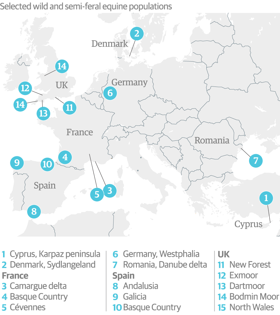 How many horses are there in the European Union? | News | The Guardian